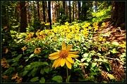 10th Jul 2011 - Mountain Flowers
