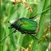 Junebug by cjwhite