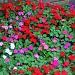 Flower Bed by hjbenson