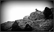 12th Jul 2011 - Rocky Mountain Bighorn Sheep
