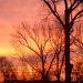 evening glory by bruni