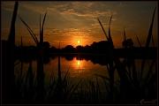 14th Jul 2011 - Pond Sunset