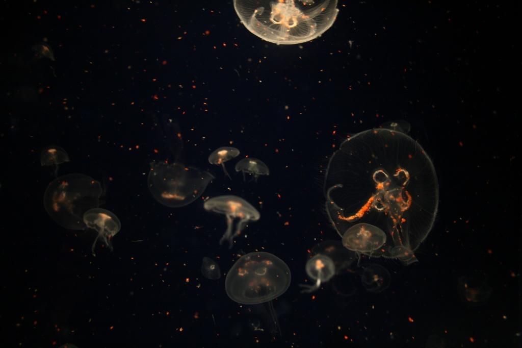 Alien Invasion by kerristephens