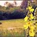 Yellow by halkia