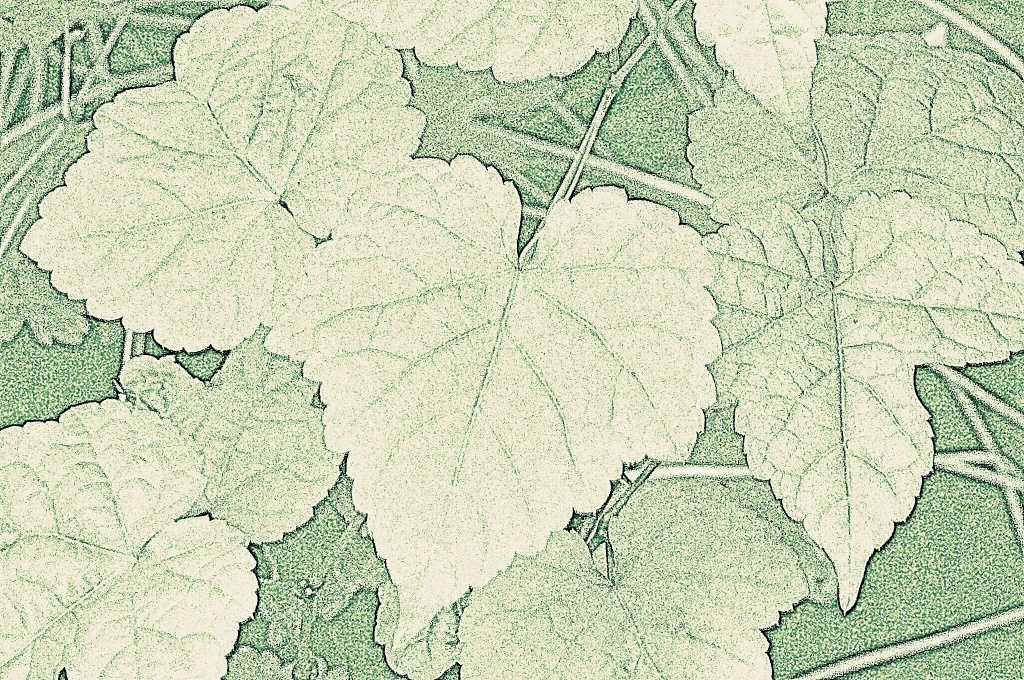 leaf lines by reba