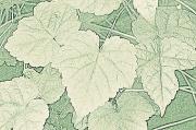 19th Jul 2011 - leaf lines