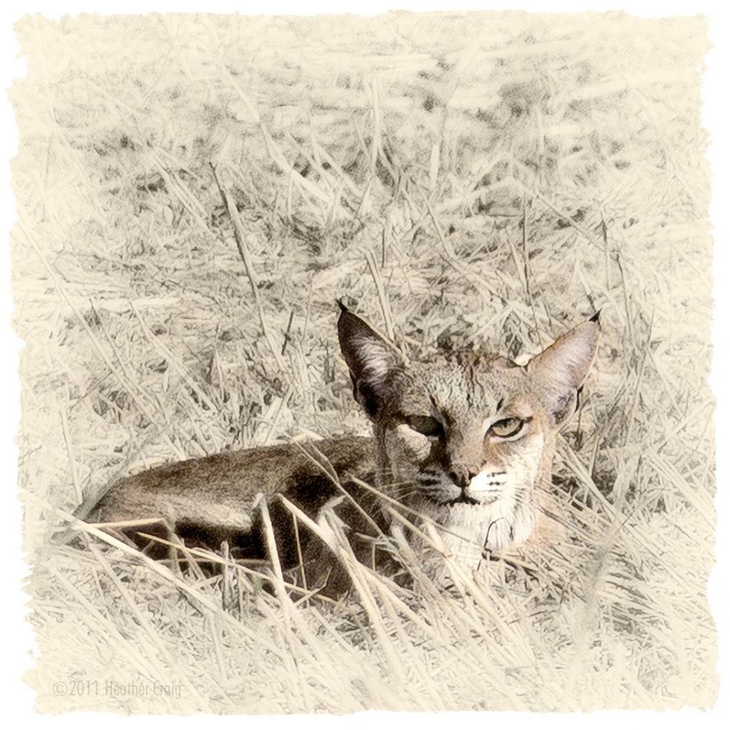 Kitty Kitty by pixelchix