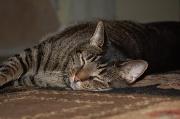 19th Jul 2011 - Cat Nap