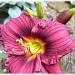 Velvet by sunnygreenwood