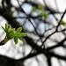 Leaves by harvey