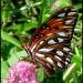 Butterfly Field by cjwhite