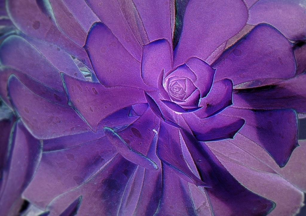 violet spiral by reba