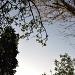 Trees in the garden by overalvandaan