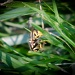 July26 Lurking in the Grass - yikes! by mikegifford