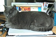 28th Jul 2011 - there's a meatloaf on my laptop