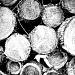Wood by halkia