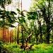 A walk in the woods by halkia