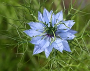 31st Jul 2011 - Wild Flower