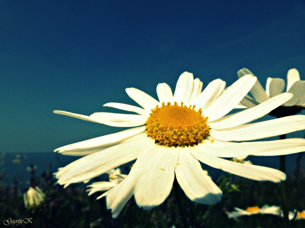 Hello Sunshine! by geertje