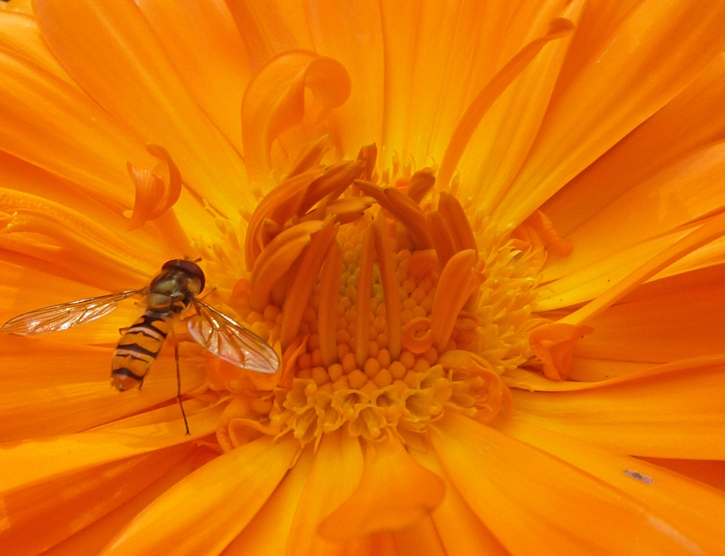 flower and insect macro by phil_howcroft