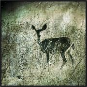 2nd Aug 2011 - Oh, Deer