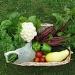 Basket of Vegies by rrt
