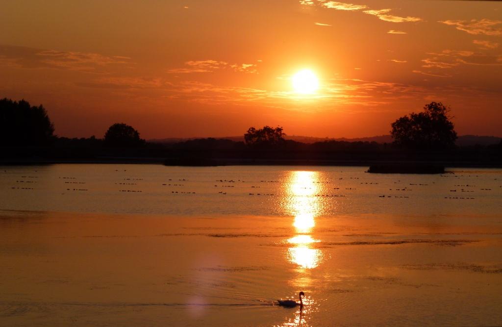 Swan at sunset by dulciknit