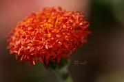 5th Aug 2011 - Orange...