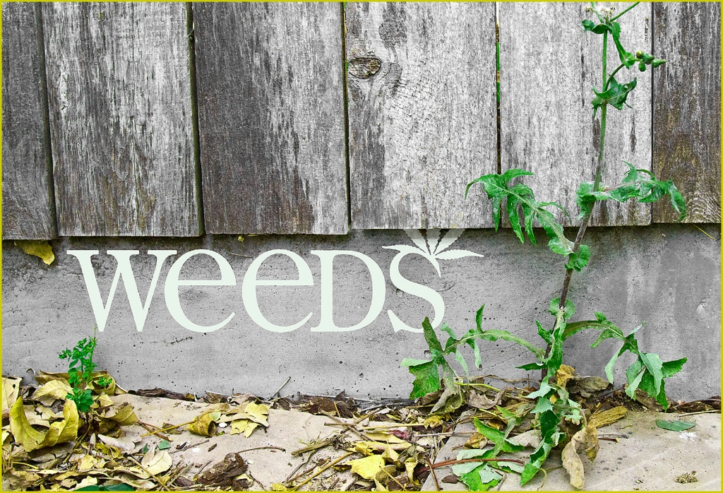 Weeds by aikiuser