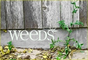 5th Aug 2011 - Weeds