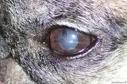 6th Aug 2011 -  Raphael's Evil Eye