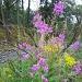 roadside flowers by jmj