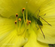 6th Aug 2011 - Into the Unknown ... the Katydid and the Cobras