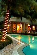 19th Apr 2010 - Tropical Nights