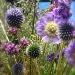 Sunday flowers by reba