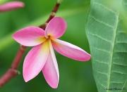 8th Aug 2011 -  Unknown Flower