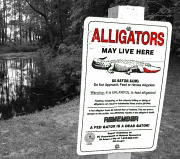 22nd Apr 2010 - Beware of Alligators!