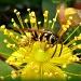 Flower-hug by geertje