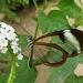 Elusive butterfly by dulciknit