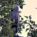 great blue heron by mjalkotzy