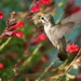 Yet Another Hummingbird by kerristephens