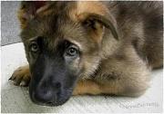 11th Aug 2011 - Puppy Love