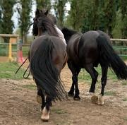 12th Aug 2011 - Horse riding