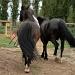 Horse riding by parisouailleurs
