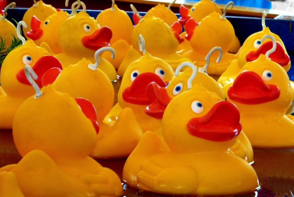 Lord love a duck! by dulciknit