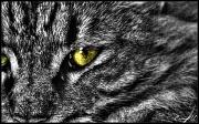 14th Aug 2011 - Eye of the Tigress