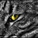 Eye of the Tigress by exposure4u