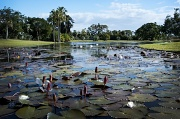 16th Aug 2011 - Anderson Gardens, Townsville