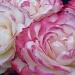 Slight Blush by denisedaly