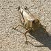Aaah, Grasshopper!!! by kdrinkie